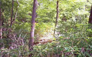 Lot 5 Woods Pond Court Cleveland, SC 29635 - Image 1