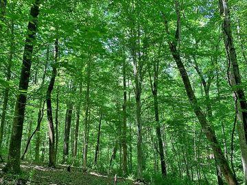 2502 Wood Valley Road Winston Salem, NC 27106 - Image 1