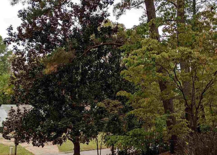 3607 Woodside Road photo #1