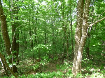 Lot 8 Buena Vista Drive West Jefferson, NC 28694 - Image 1