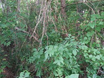 1226 Sanders Street Rock Hill, SC 29732 - Image 1