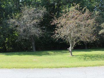 0 Woodland Drive Elon, NC 27244 - Image 1
