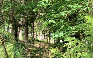 6881 Pine Moss Lane Clover, SC 29710 - Image 1