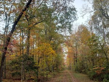 03 Pittman Creek Taylors, SC 29687 - Image 1