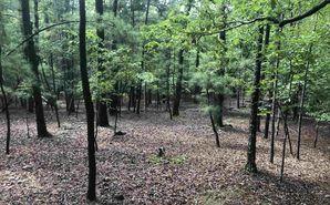 1623 N Pea Ridge Road Pittsboro, NC 27312 - Image 1