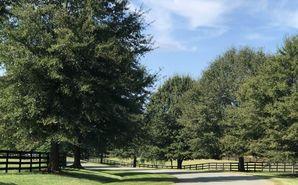 72 Saddle Ridge Drive Siler City, NC 27344 - Image 1